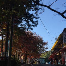 紅葉おおすすめスポット 大平山